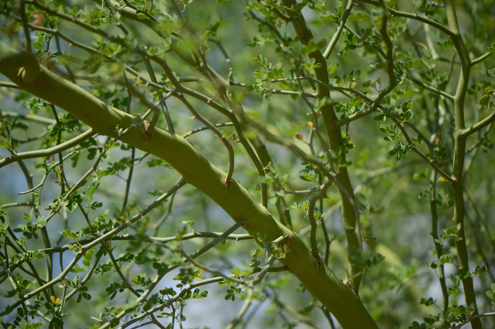lessons from the palo verde tree christopher boone dean of asu s